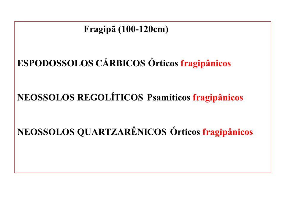 Fragipã (100-120cm) ESPODOSSOLOS CÁRBICOS Órticos fragipânicos. NEOSSOLOS REGOLÍTICOS Psamíticos fragipânicos.