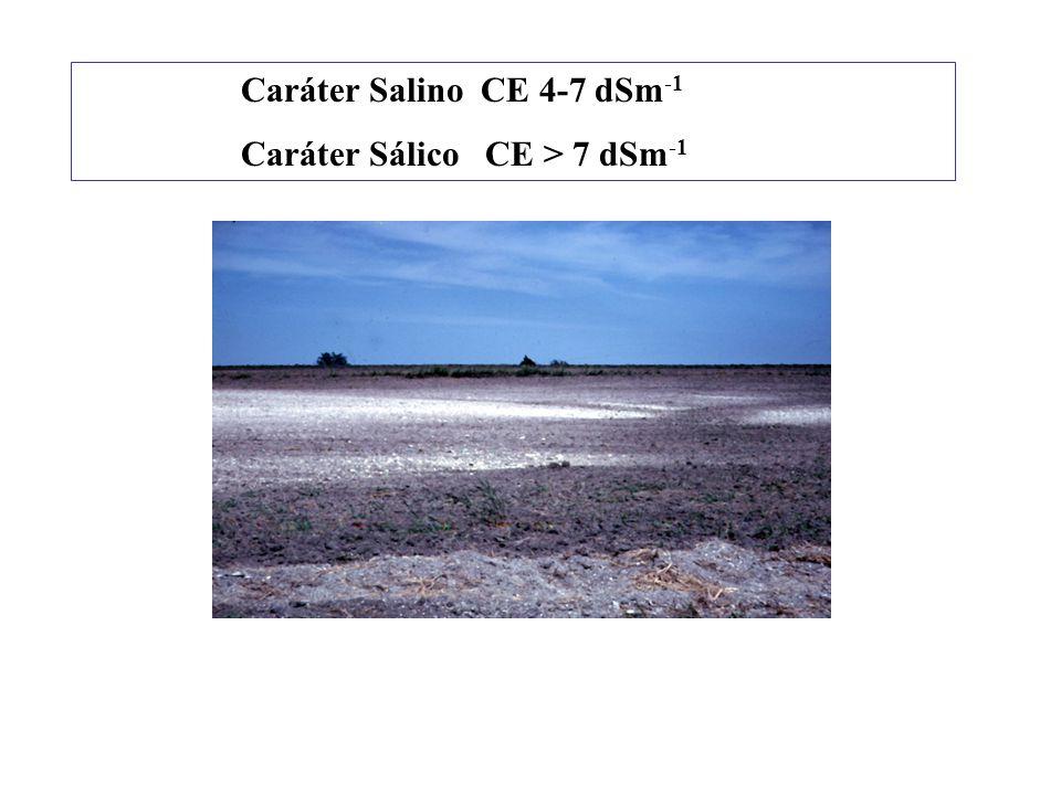 Caráter Salino CE 4-7 dSm-1