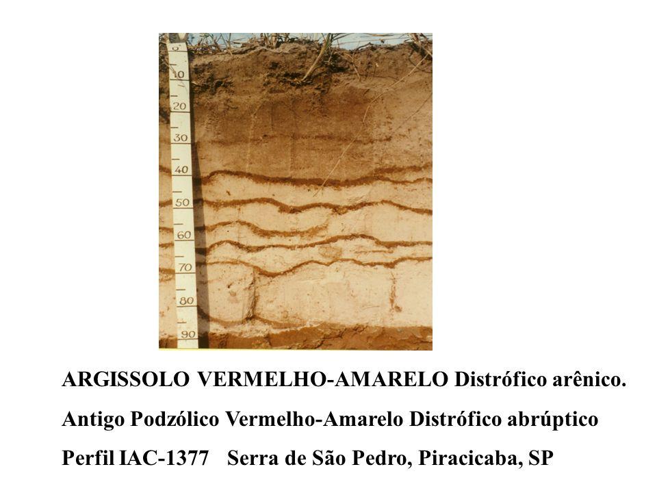 ARGISSOLO VERMELHO-AMARELO Distrófico arênico.