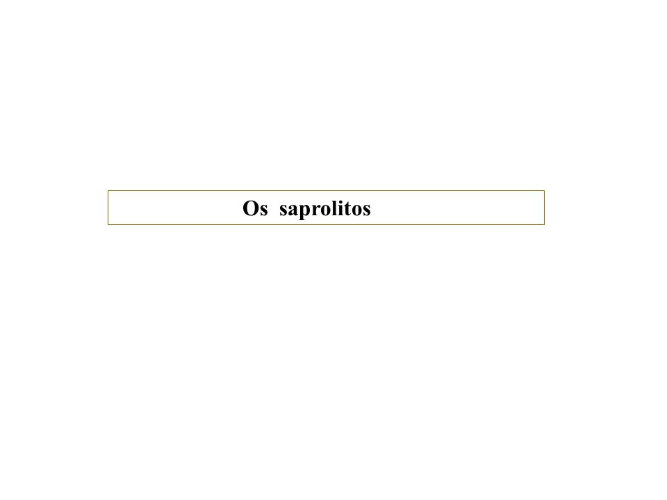 Os saprolitos