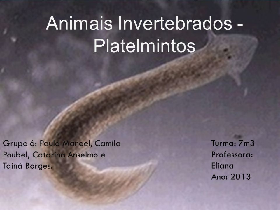 Animais Invertebrados - Platelmintos