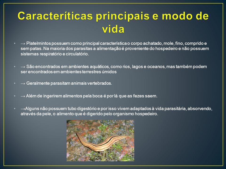 Caracteríticas principais e modo de vida