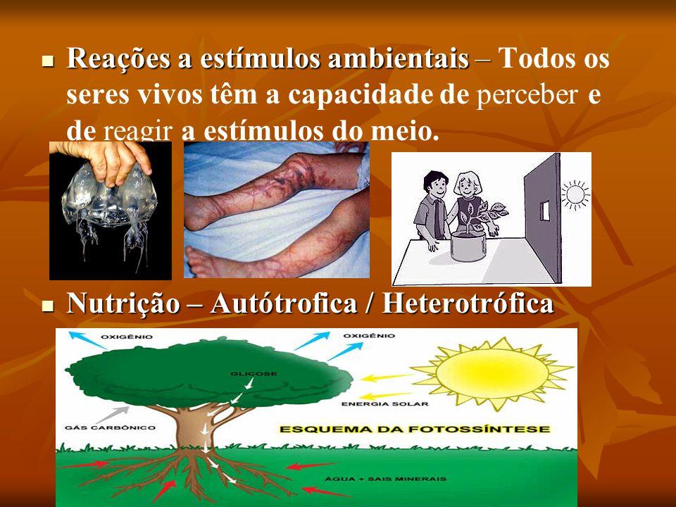 Reações a estímulos ambientais – Todos os seres vivos têm a capacidade de perceber e de reagir a estímulos do meio.
