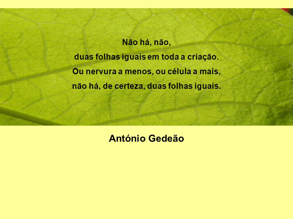 António Gedeão Não há, não, duas folhas iguais em toda a criação.