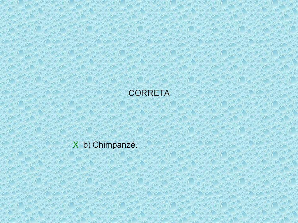 CORRETA X b) Chimpanzé.