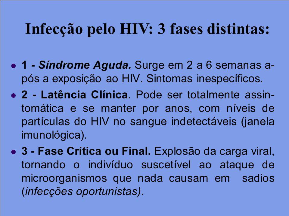Infecção pelo HIV: 3 fases distintas: