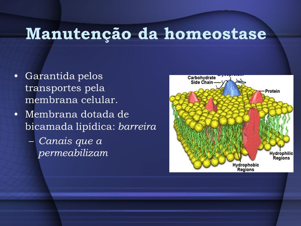 Manutenção da homeostase