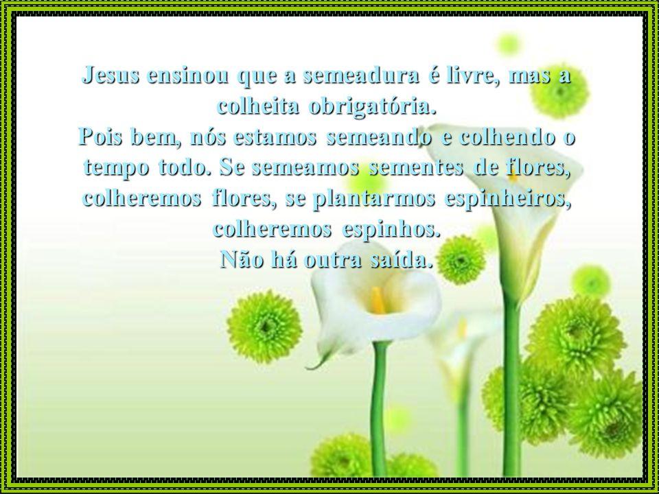 Jesus ensinou que a semeadura é livre, mas a colheita obrigatória.