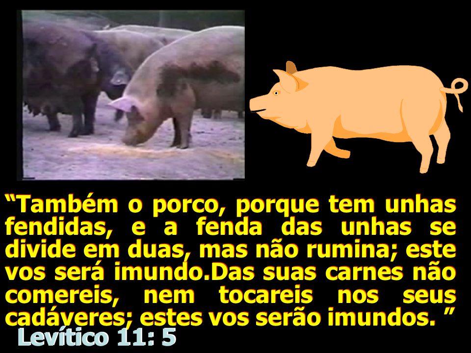 Também o porco, porque tem unhas fendidas, e a fenda das unhas se divide em duas, mas não rumina; este vos será imundo.Das suas carnes não comereis, nem tocareis nos seus cadáveres; estes vos serão imundos.