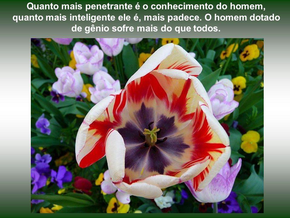 Quanto mais penetrante é o conhecimento do homem, quanto mais inteligente ele é, mais padece.
