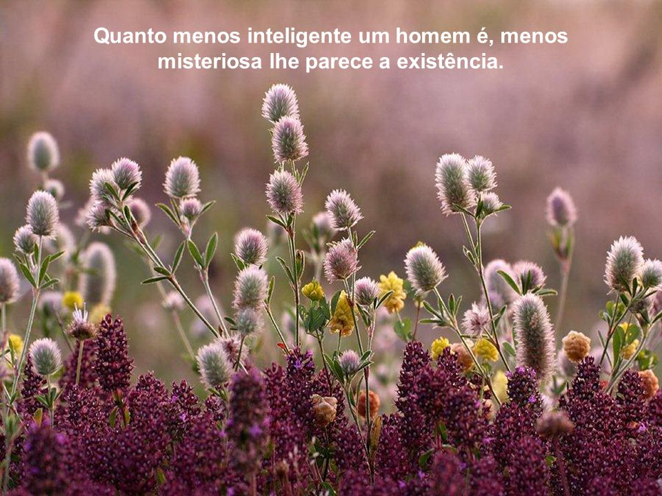 Quanto menos inteligente um homem é, menos misteriosa lhe parece a existência.