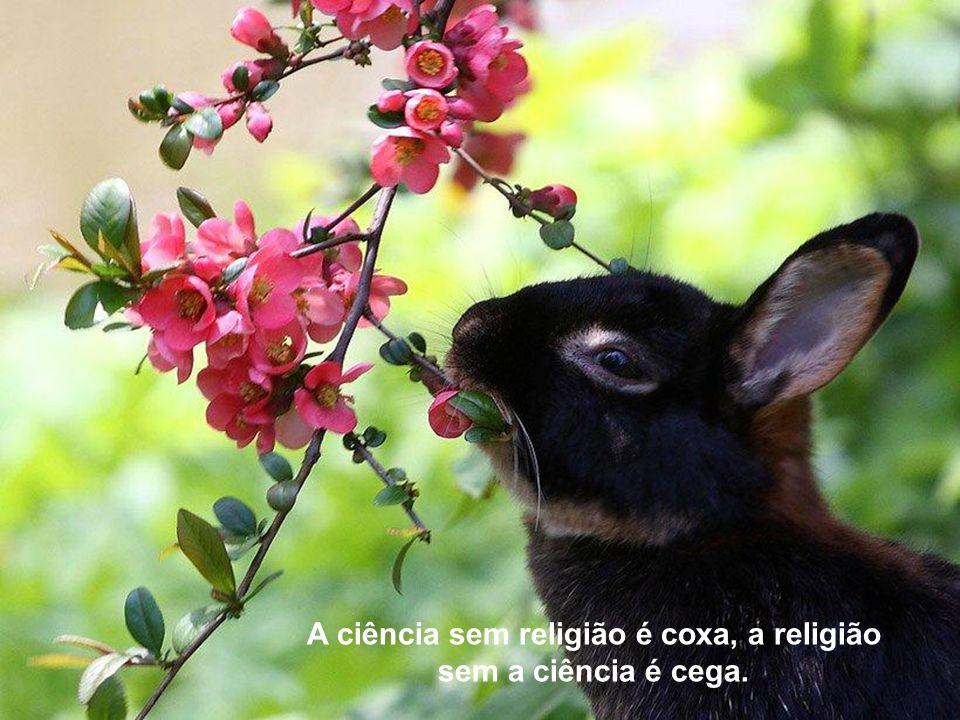 A ciência sem religião é coxa, a religião sem a ciência é cega.