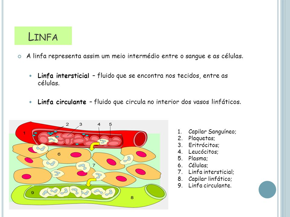 Linfa Linfa. A linfa representa assim um meio intermédio entre o sangue e as células.