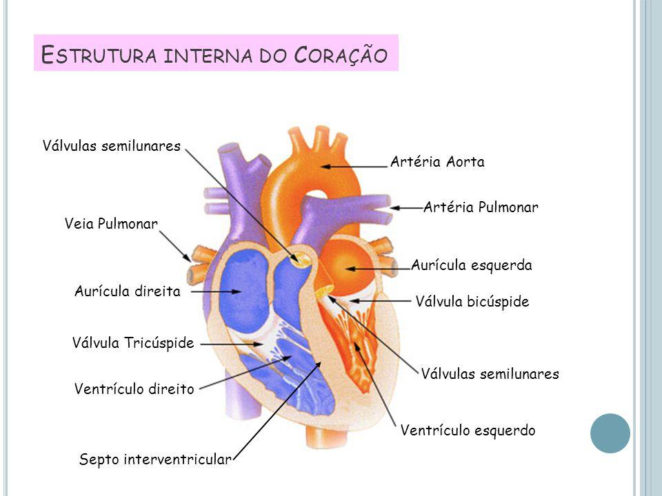 Estrutura interna do Coração