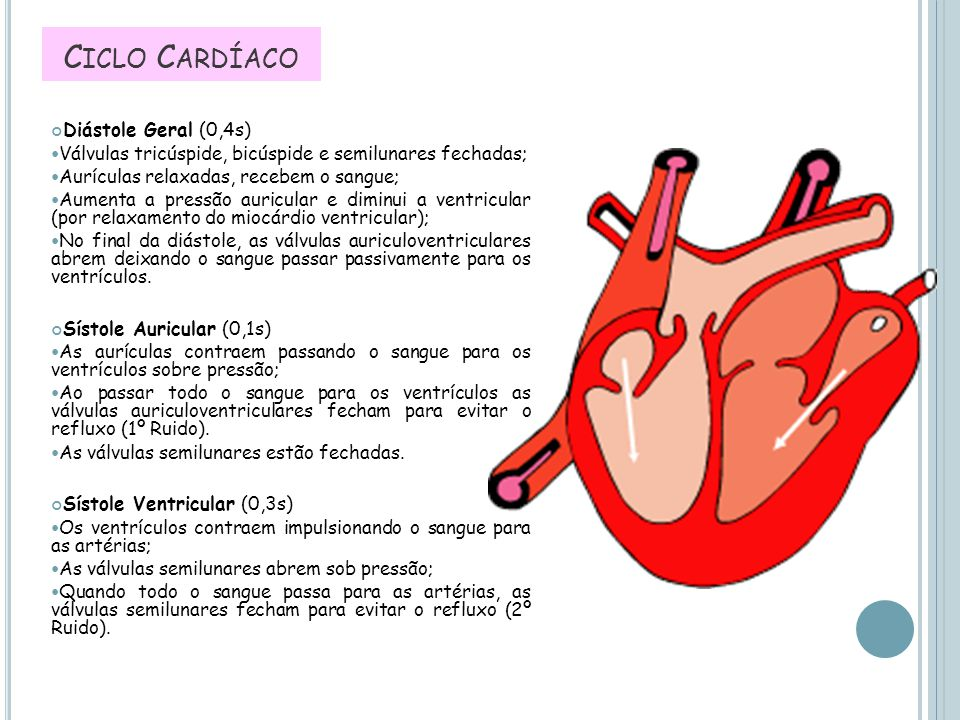 Ciclo Cardíaco Diástole Geral (0,4s)