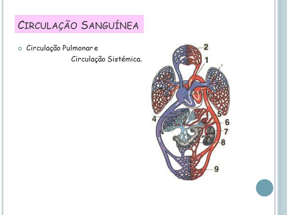 Circulação Sanguínea Circulação Pulmonar e Circulação Sistémica.