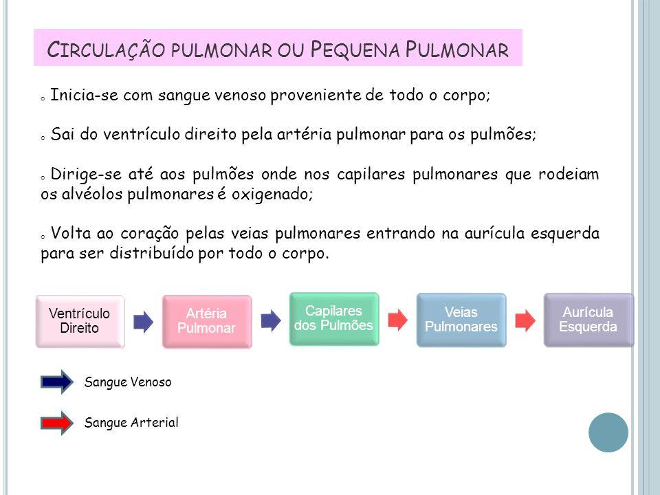 Circulação pulmonar ou Pequena Pulmonar