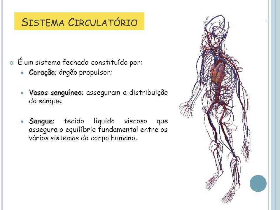 Sistema Circulatório É um sistema fechado constituído por: