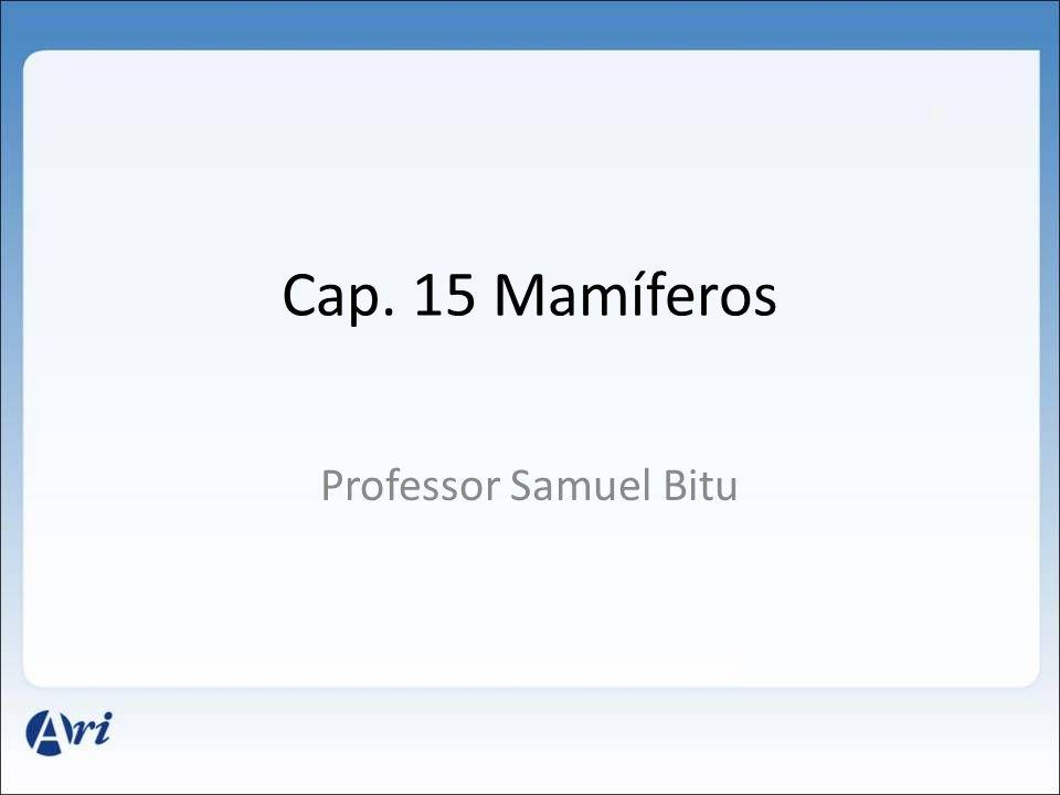 Cap. 15 Mamíferos Professor Samuel Bitu