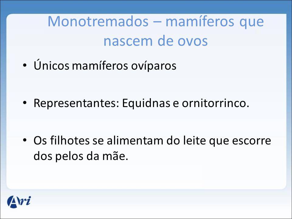 Monotremados – mamíferos que nascem de ovos