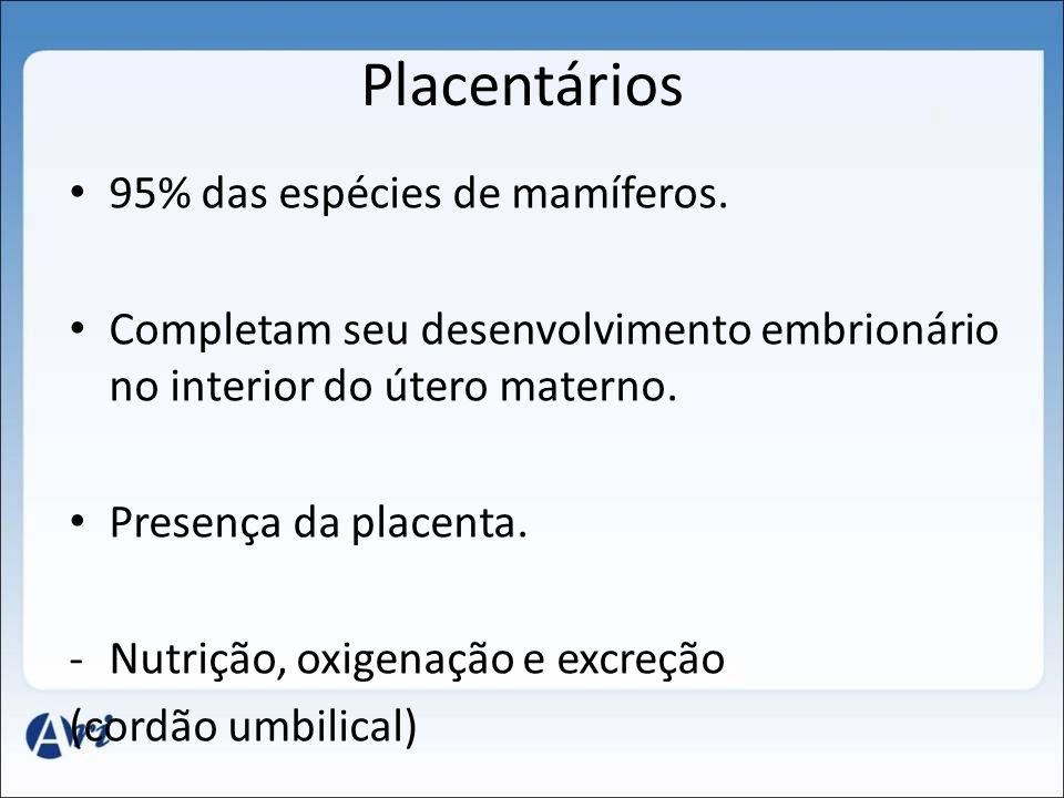 Placentários 95% das espécies de mamíferos.