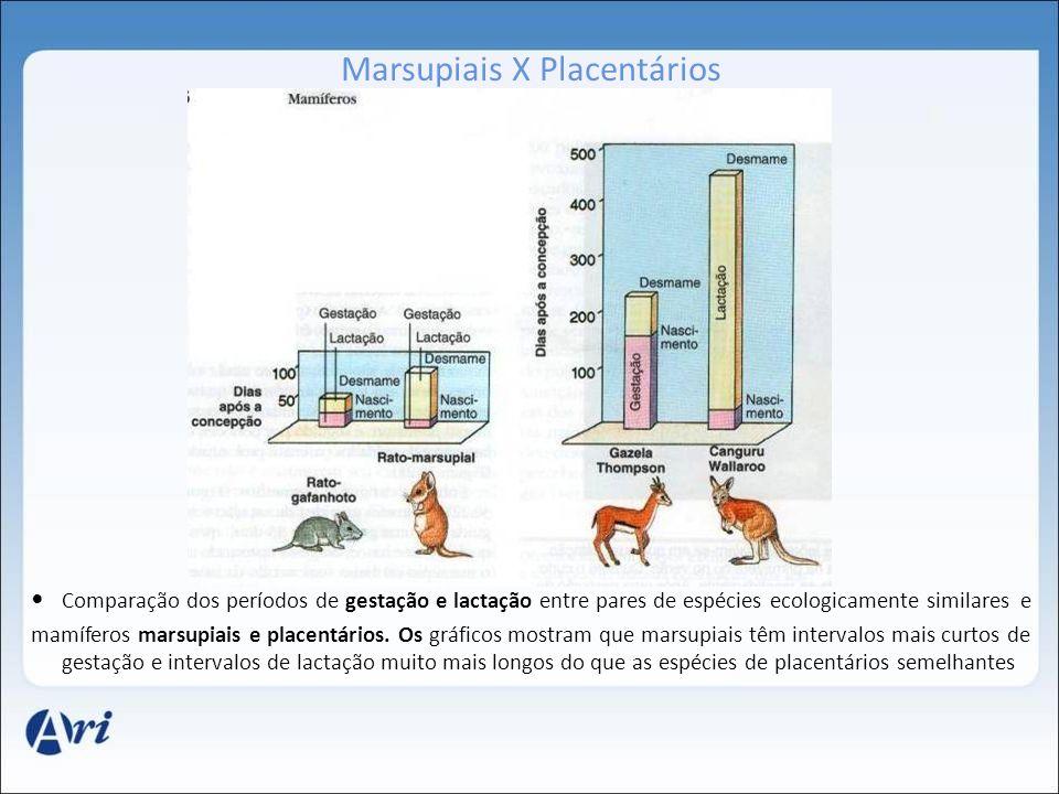 Marsupiais X Placentários