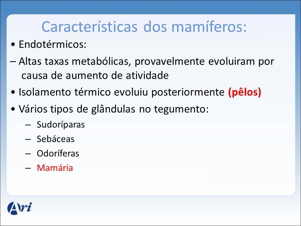 Características dos mamíferos: