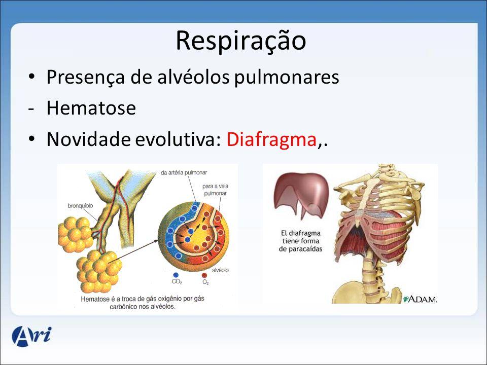 Respiração Presença de alvéolos pulmonares Hematose