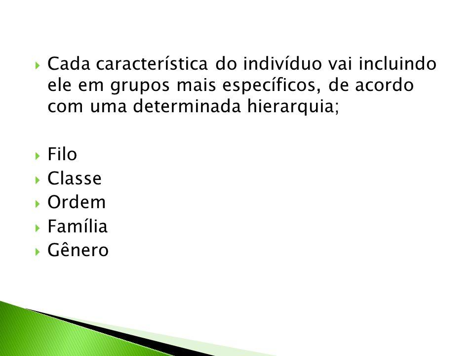 Cada característica do indivíduo vai incluindo ele em grupos mais específicos, de acordo com uma determinada hierarquia;