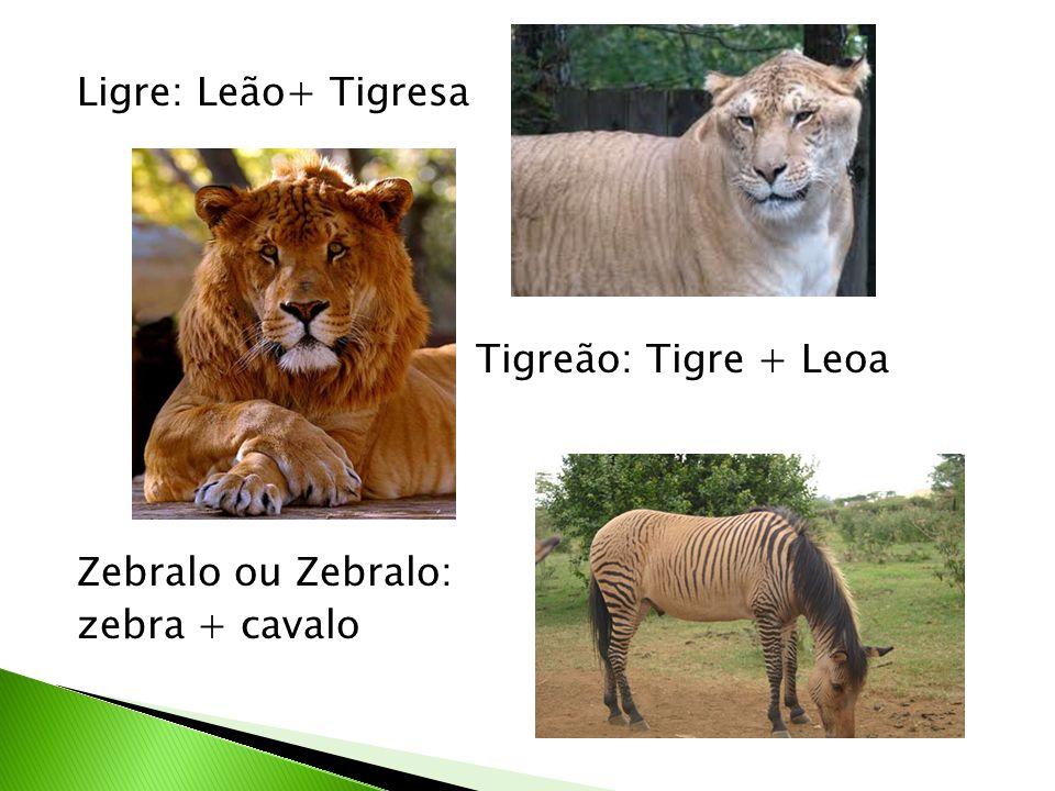 Ligre: Leão+ Tigresa Tigreão: Tigre + Leoa Zebralo ou Zebralo: zebra + cavalo