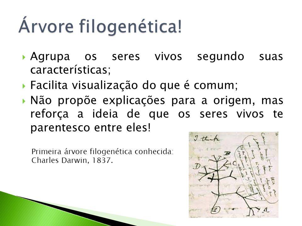 Árvore filogenética! Agrupa os seres vivos segundo suas características; Facilita visualização do que é comum;