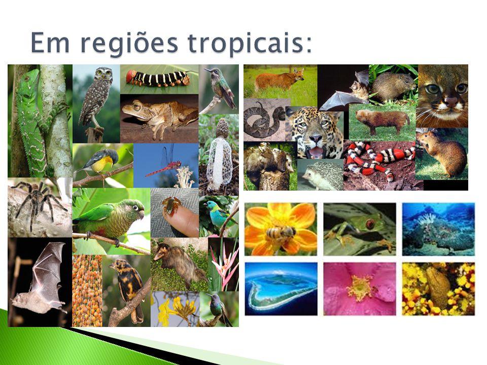 Em regiões tropicais: