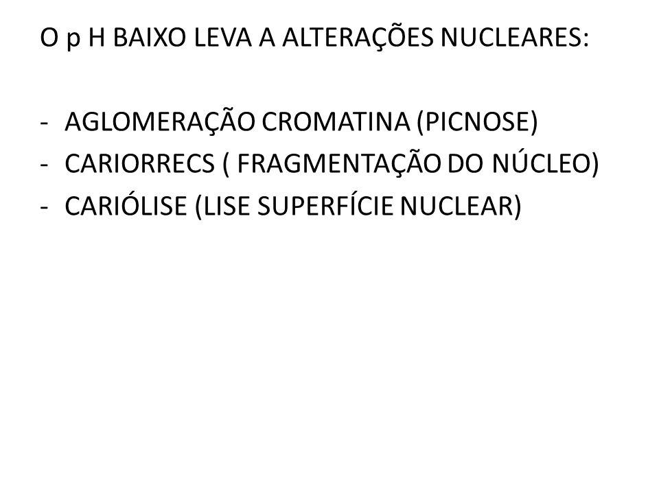 O p H BAIXO LEVA A ALTERAÇÕES NUCLEARES: