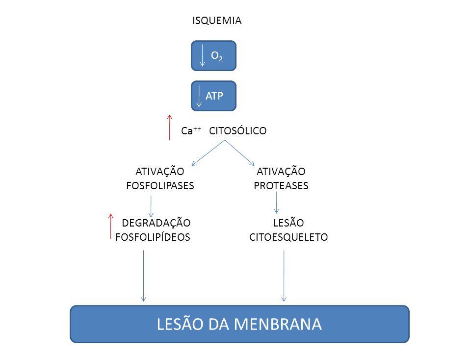 LESÃO DA MENBRANA ISQUEMIA O2 ATP Ca++ CITOSÓLICO ATIVAÇÃO