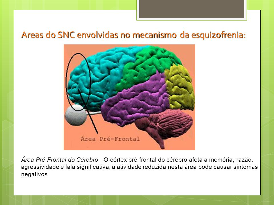Areas do SNC envolvidas no mecanismo da esquizofrenia: