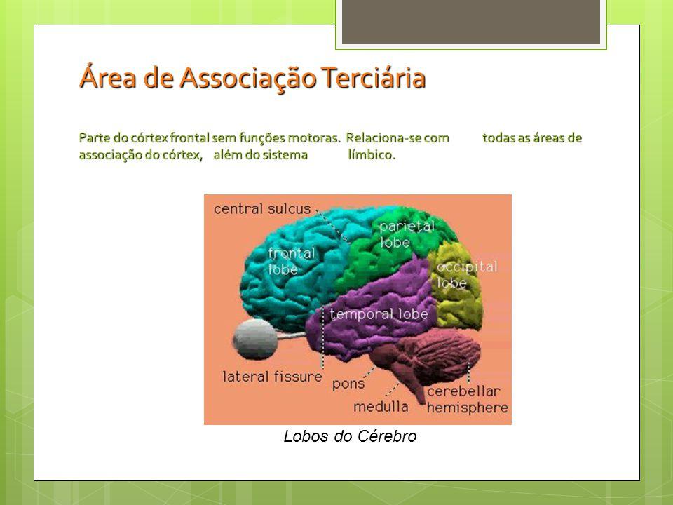 Área de Associação Terciária Parte do córtex frontal sem funções motoras. Relaciona-se com todas as áreas de associação do córtex, além do sistema límbico.
