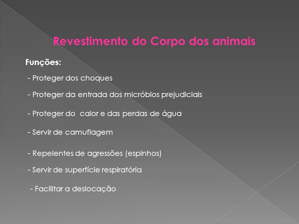 Revestimento do Corpo dos animais
