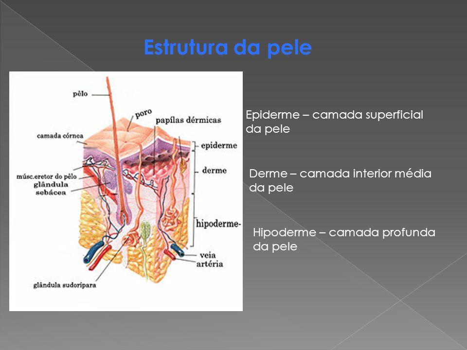 Estrutura da pele Epiderme – camada superficial da pele