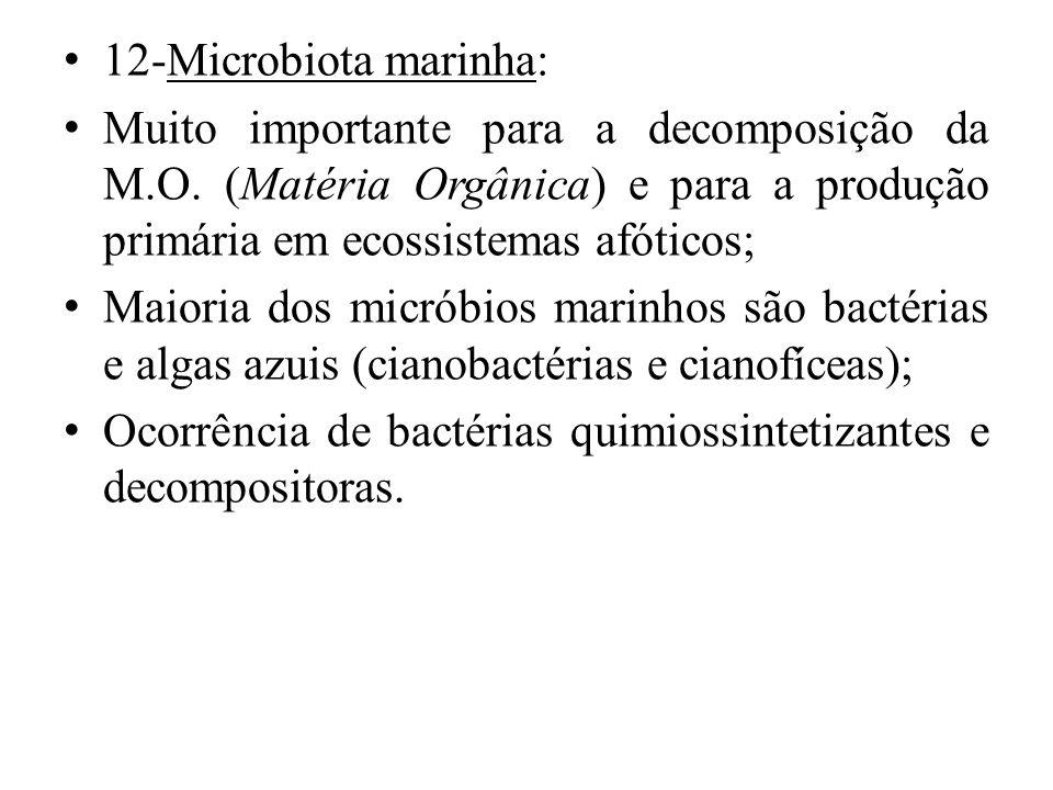 12-Microbiota marinha: Muito importante para a decomposição da M.O. (Matéria Orgânica) e para a produção primária em ecossistemas afóticos;