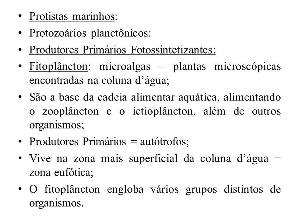 Protistas marinhos: Protozoários planctônicos: Produtores Primários Fotossintetizantes: