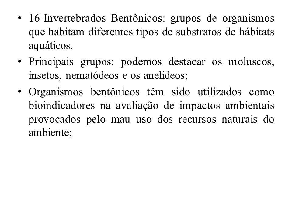 16-Invertebrados Bentônicos: grupos de organismos que habitam diferentes tipos de substratos de hábitats aquáticos.