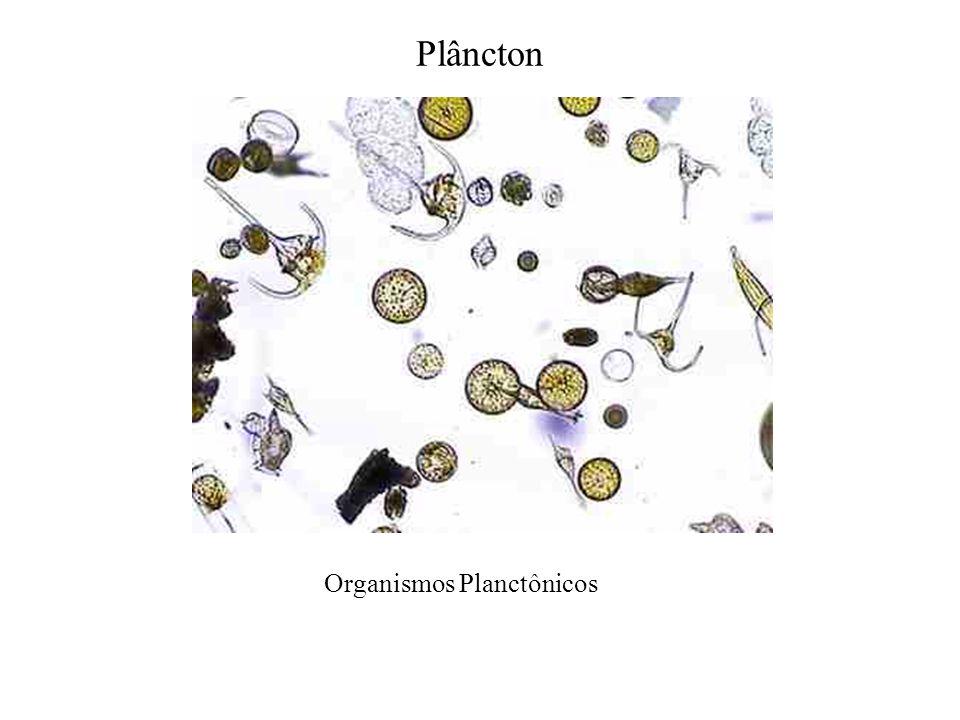 Organismos Planctônicos