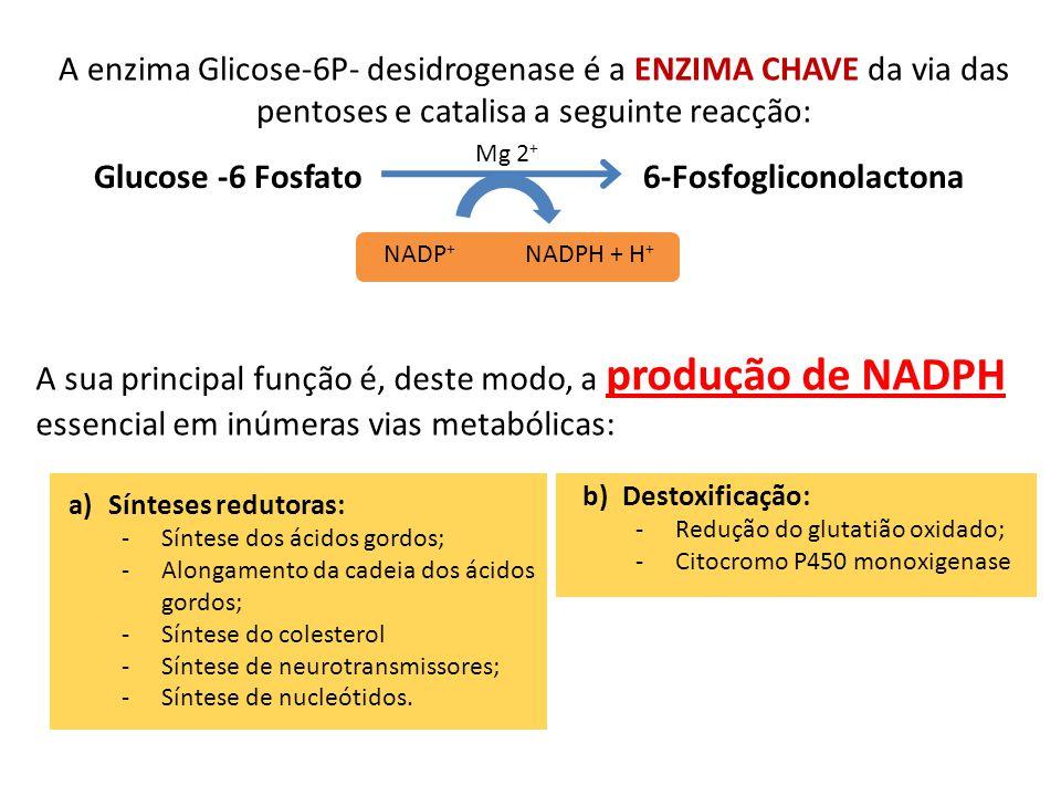 Glucose -6 Fosfato 6-Fosfogliconolactona