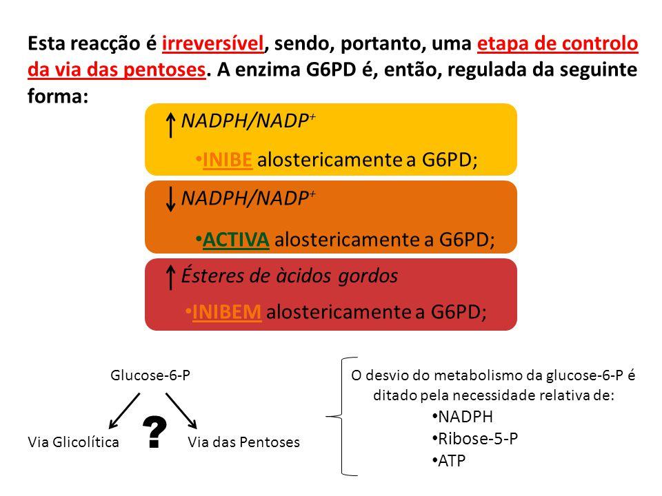 Esta reacção é irreversível, sendo, portanto, uma etapa de controlo da via das pentoses. A enzima G6PD é, então, regulada da seguinte forma: