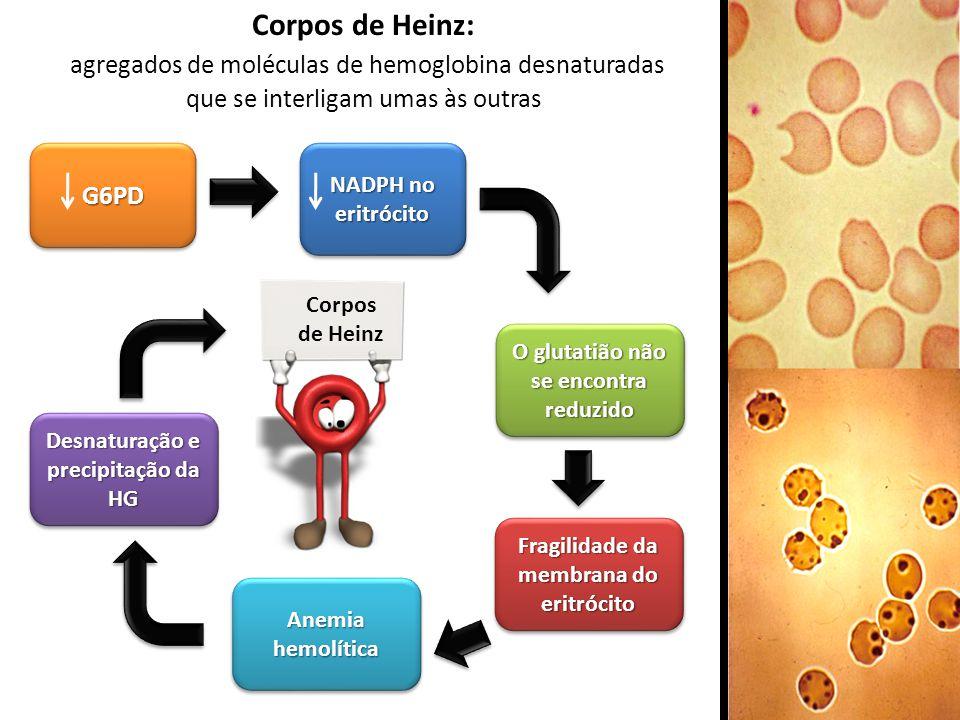 Corpos de Heinz: agregados de moléculas de hemoglobina desnaturadas que se interligam umas às outras.