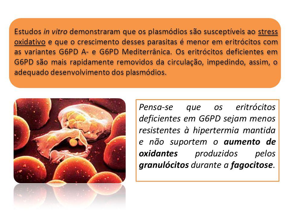 Estudos in vitro demonstraram que os plasmódios são susceptíveis ao stress oxidativo e que o crescimento desses parasitas é menor em eritrócitos com as variantes G6PD A- e G6PD Mediterrânica. Os eritrócitos deficientes em G6PD são mais rapidamente removidos da circulação, impedindo, assim, o adequado desenvolvimento dos plasmódios.