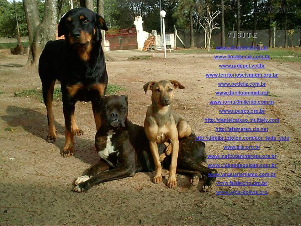 V I S I T E www.abcanimal.org.br www.floraisecia.com.br
