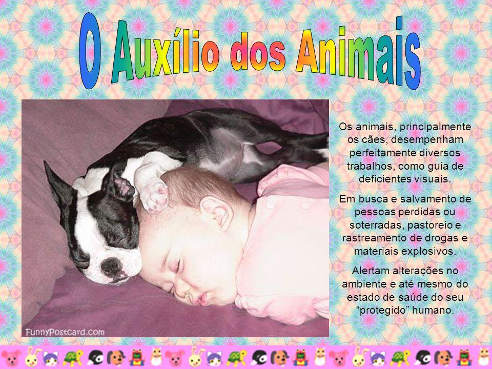 O Auxílio dos Animais Os animais, principalmente os cães, desempenham perfeitamente diversos trabalhos, como guia de deficientes visuais.