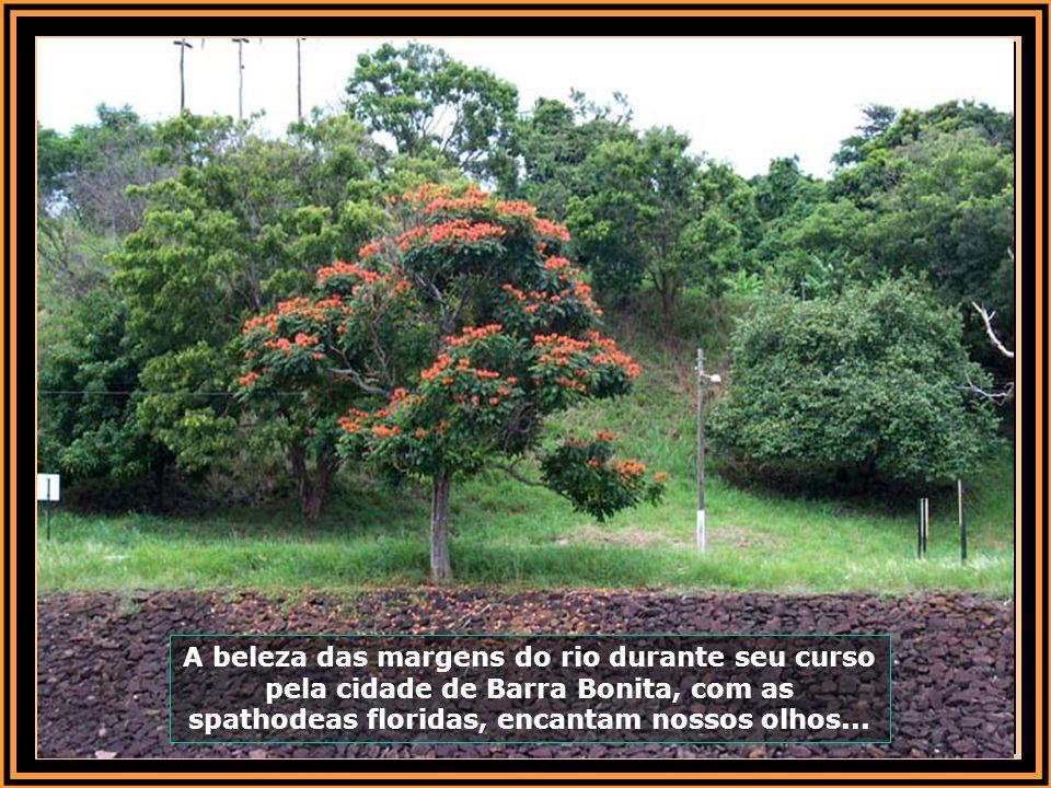A beleza das margens do rio durante seu curso pela cidade de Barra Bonita, com as spathodeas floridas, encantam nossos olhos...