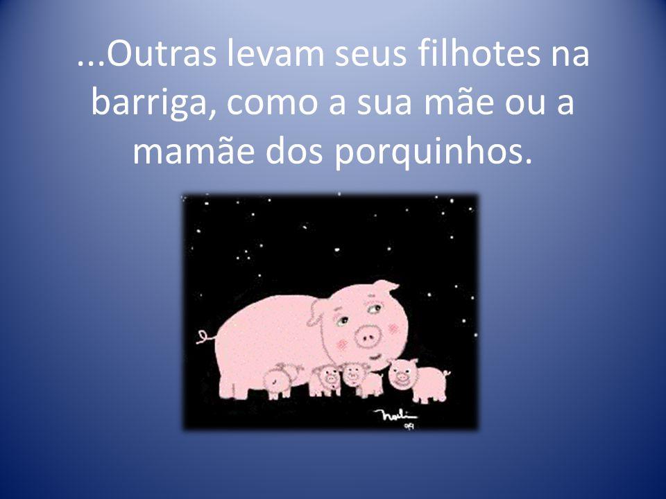 ...Outras levam seus filhotes na barriga, como a sua mãe ou a mamãe dos porquinhos.